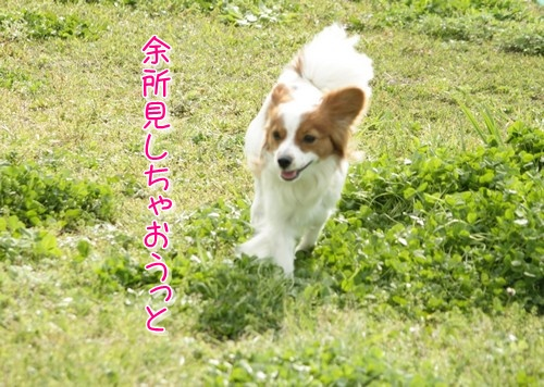 2010410lunarun1.jpg