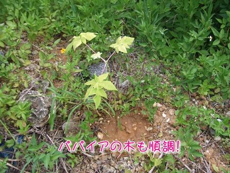 201074pai2.jpg