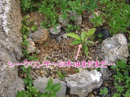 201074pai3.jpg