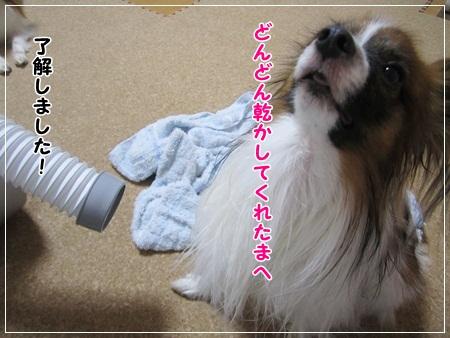201107015.jpg