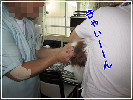 20110701iao.jpg