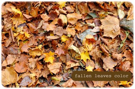 落ち葉のコピー