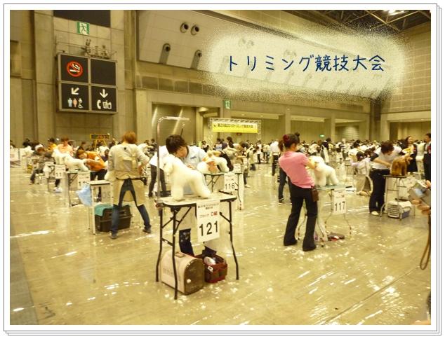 トリミング競技大会.jpg