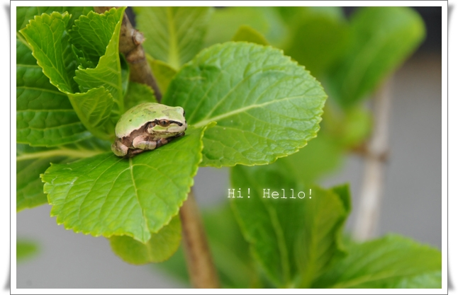 カエル ①.jpg