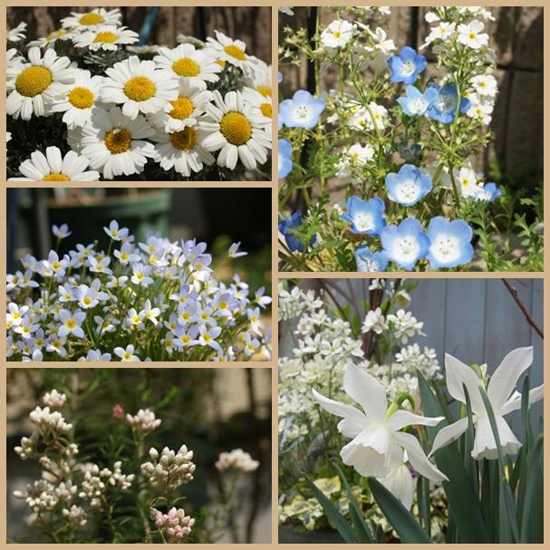 庭の花page.jpg