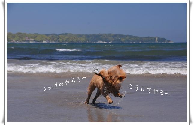 こんぶー.jpg