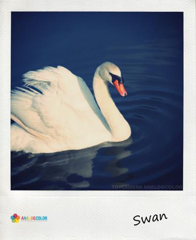 白鳥のコピー.jpg
