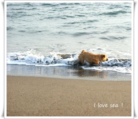海が好き.jpg