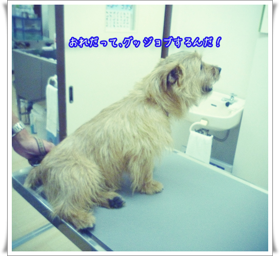 診察台でのコピー.jpg