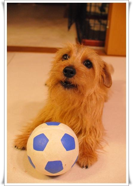 サッカーリーフ②.jpg
