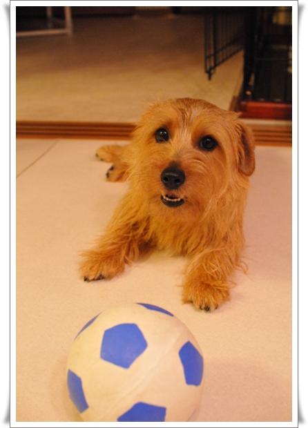 サッカーリーフ①.jpg