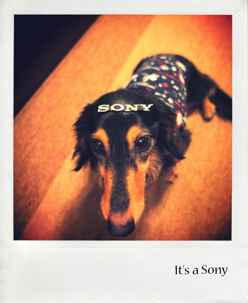 it's a Sony.jpg