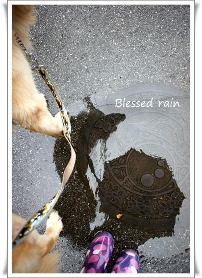 恵みの雨.jpg