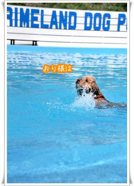 泳ぐシャンプー.jpg