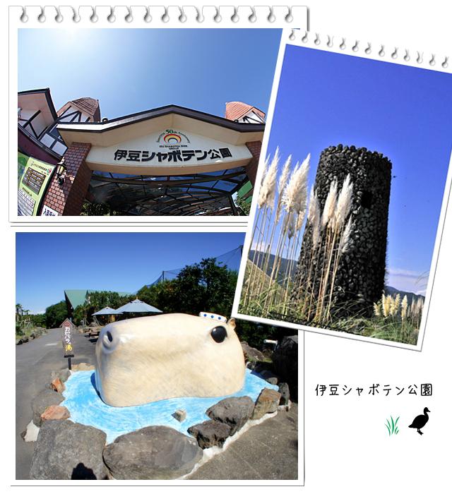 シャボテン2010.jpg