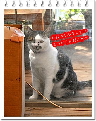 さぼてん猫.jpg