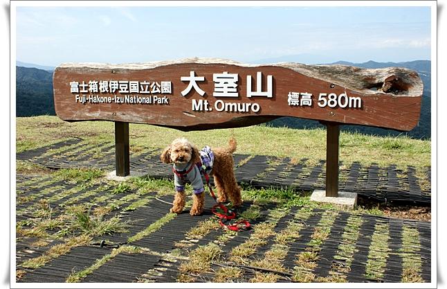 大室山とシャンプー.jpg