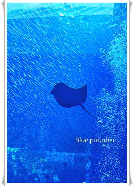 青い楽園.jpg
