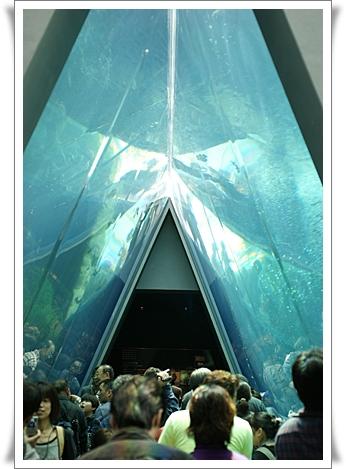 三角水槽.jpg