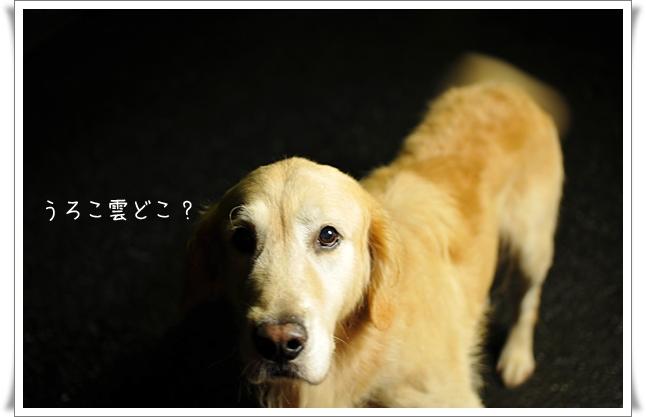 うろこ雲どこ.jpg