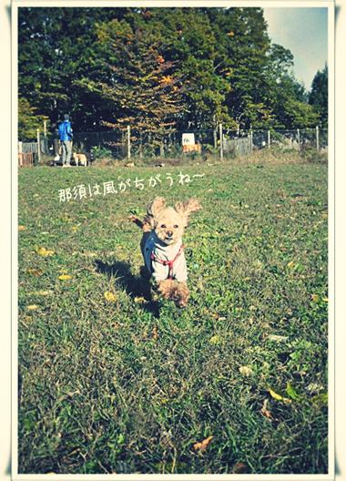那須の風.jpg_effected.jpg
