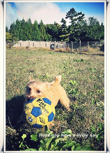 サッカーボールとリーフ.jpg_effected.jpg