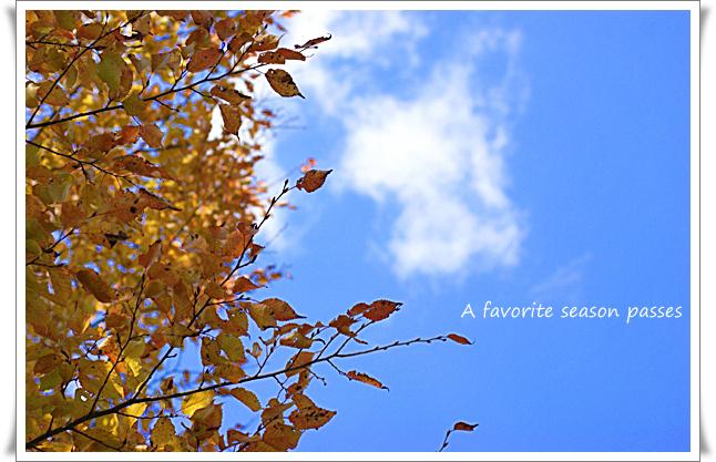 秋の色②_edited-1.jpg