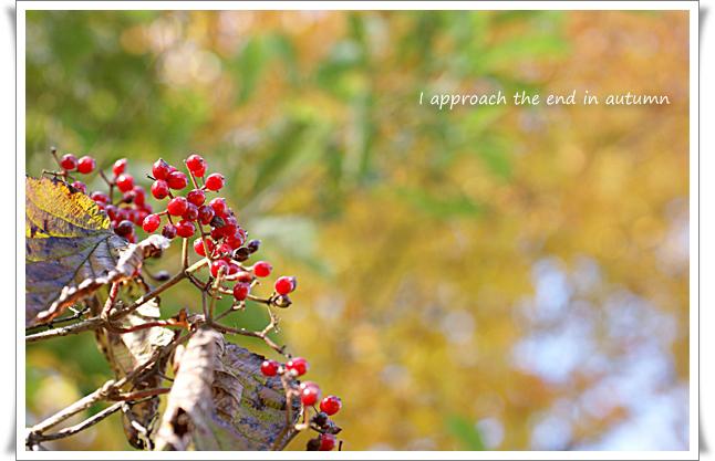 秋の色_edited-1.jpg