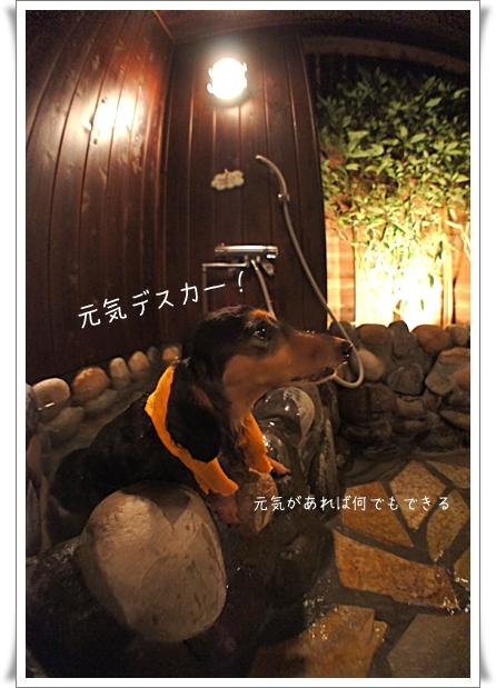 猪木ノエル.jpg