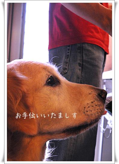 シチュー番犬_edited-1.jpg