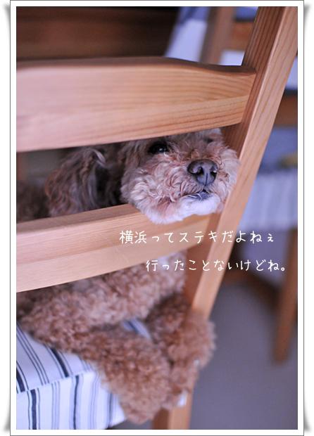 横浜すてき_edited-1.jpg