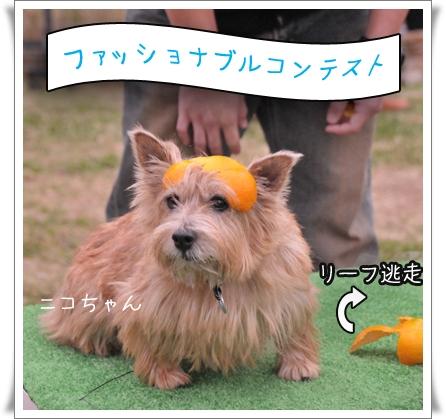 ファッショナブルコンテスト.jpg