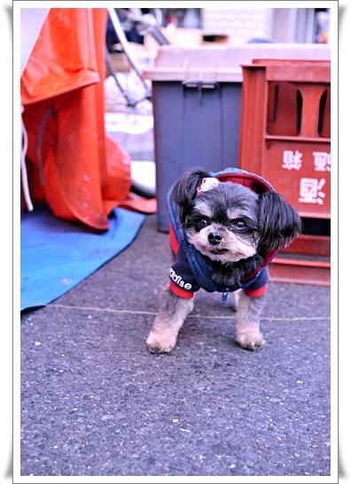 よぼ犬②.jpg