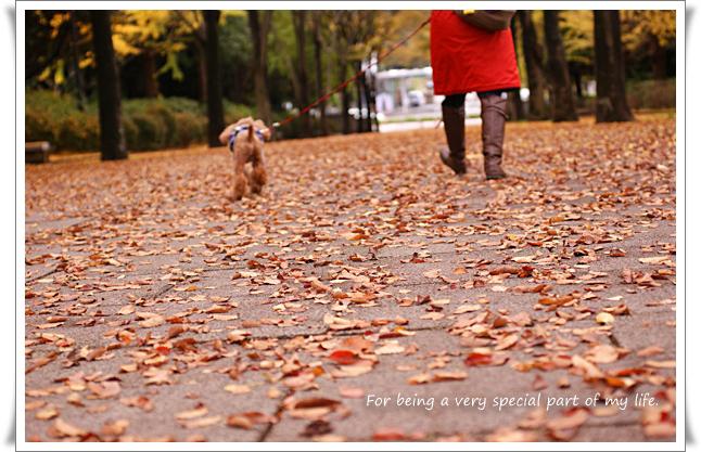 秋の道_edited-1.jpg