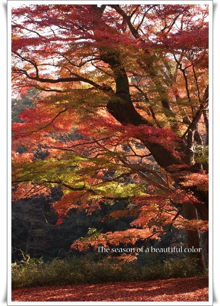 美しい色の季節.jpg