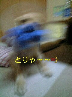090209_1817~0002-0001