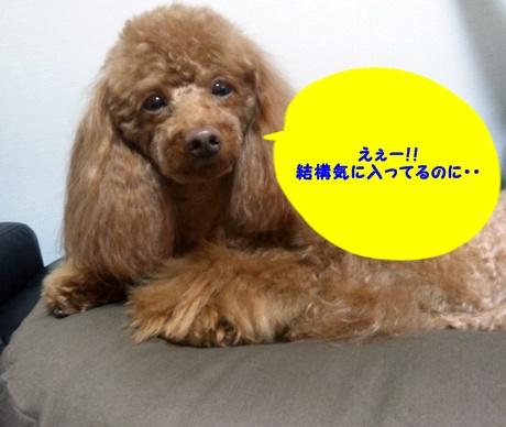 6_20111030163138.jpg