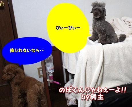 DSC03871.jpg