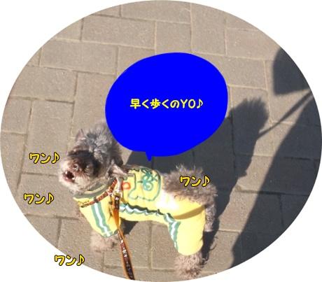 DSC_0441_20120108203001.jpg