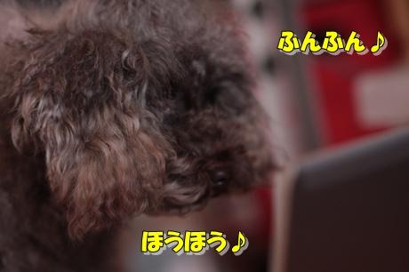 IMG_9127.jpg