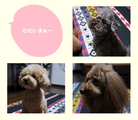 cats_20110611220935.jpg
