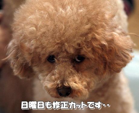 kai7_20100205230113.jpg