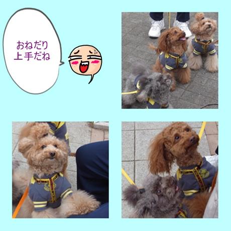 sanpo12_20091230201425.jpg