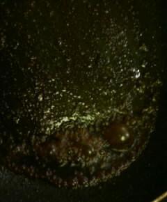 山椒の牛肉丼11