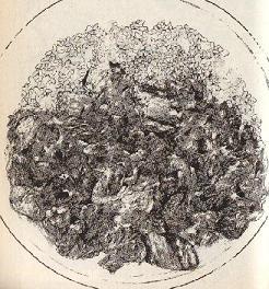 ビーフストロガナス図