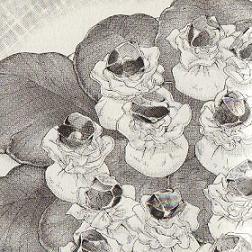 冷製ラビオリ「谷山に花が美しく咲く」図