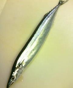 秋刀魚チャーハン1