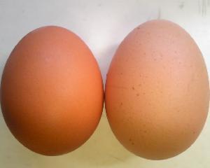 初卵の黄身の味噌漬け3