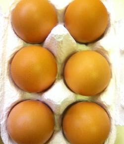 初卵の黄身の味噌漬け2