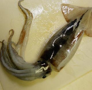イカのゴロ焼き1